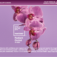 Radiant Orchid | 2014 Pantone's Color of the Year